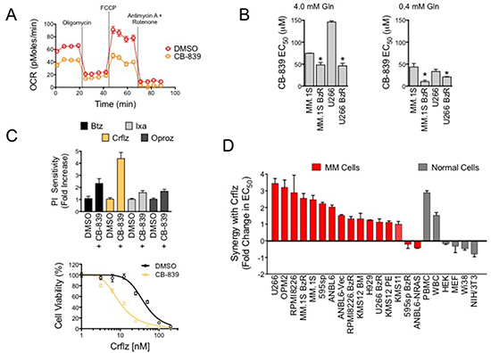CB-839 inhibits mitochondrial respiration and synergistically enhances PI-induced cytotoxicity in PI resistant and sensitive MM cells.