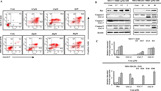 MBIC induces caspase-dependent apoptosis.