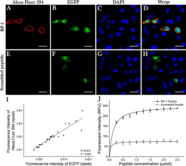 Specificity and affinity of RP-1 binding to CD44.