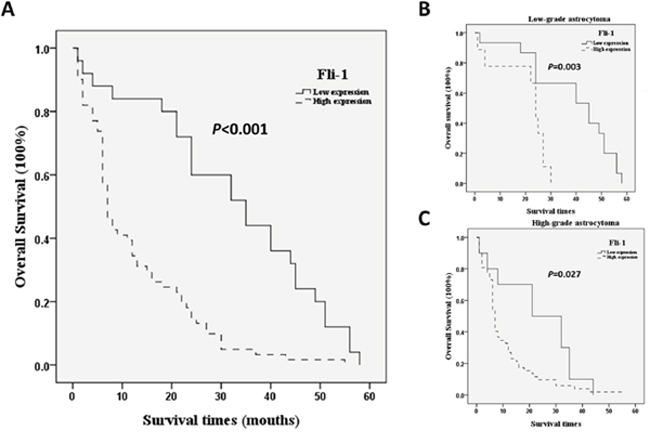 Kaplan–Meier analysis of overall patient survival according to Fli-1 expression.