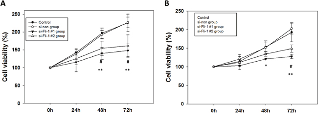Cell viability analysis of Fli-1 siRNA-transfected (A) GBM8401 cells and (B) U87MG cells cultured for 24h, 48h, and 72h in 6-well plates.