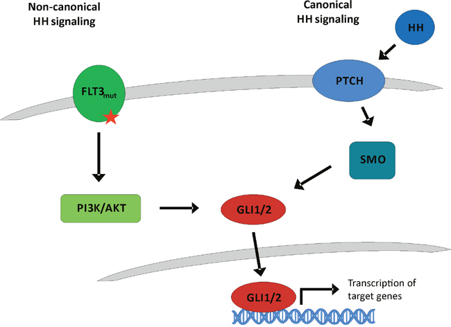 Classical canonical and proposed non-canonical Hedgehog signaling.