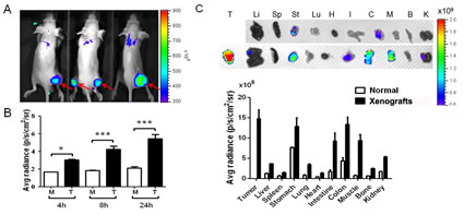 The neutrophil elastase (NE) activity was measured in CRC xenografts using an in vivo imaging agent based on a peptide (amino sequence, PMAVVQSVP) which was specifically recognized by NE.