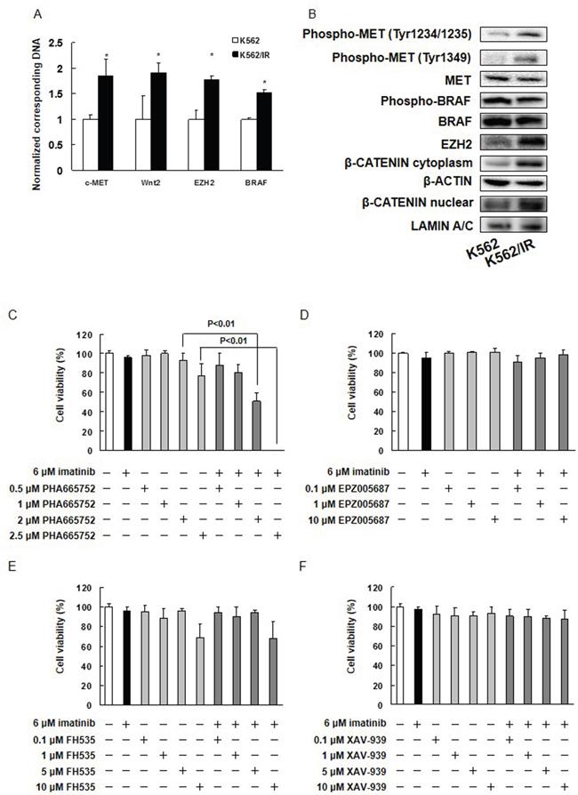 Inhibition of MET eliminates imatinib resistance in K562/IR cells.