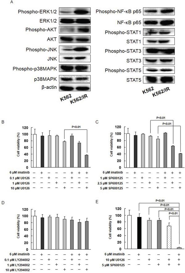 The MET/ERK and MET/JNK pathways contribute imatinib resistance.