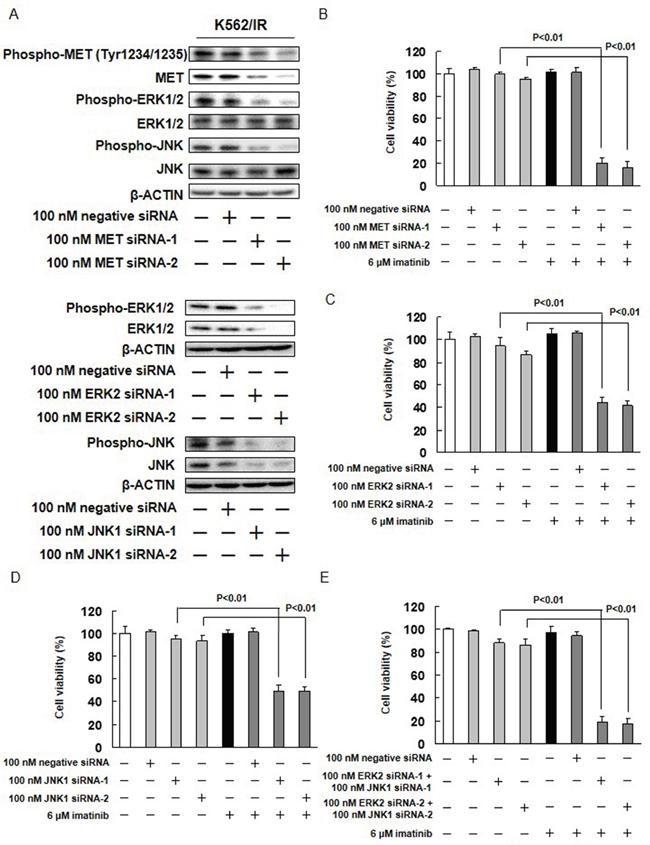 Effect of MET, ERK2, and JNK1 siRNAs on imatinib resistance.