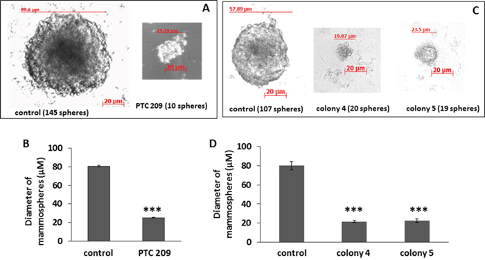 FMMC 419II cells treated with 2 μM PTC 209 or transfected with Bmi1 shRNA display significantly lower mammosphere formation potential.