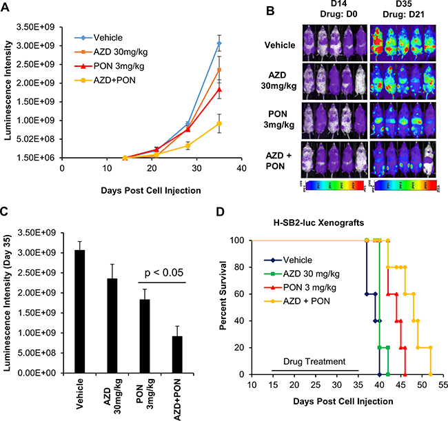 AZD1208 (AZD) and Ponatinib [5] combination treatment improves the survival of mice engrafted with human T-ALL cells.