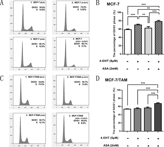 ASA enhance the anti-tumor effect of 4-OHT through cell cycle arrest.
