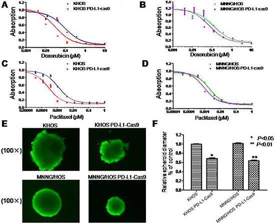 Drug resistance and three dimensional culture in osteosarcoma cell lines with and without PD-L1 CRISPR/Cas9.