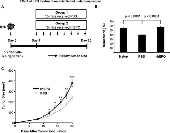 Effect of EPO treatment on established melanoma cancer.