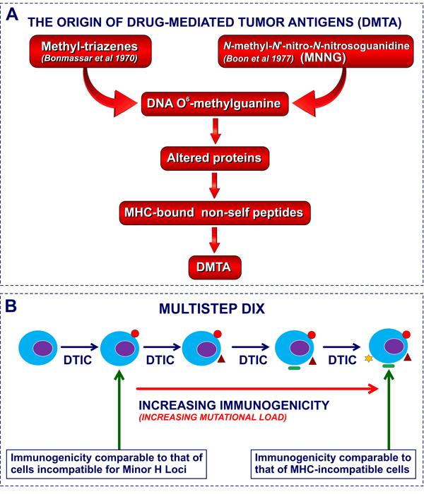 Molecular basis of DIX and CX: DNA O