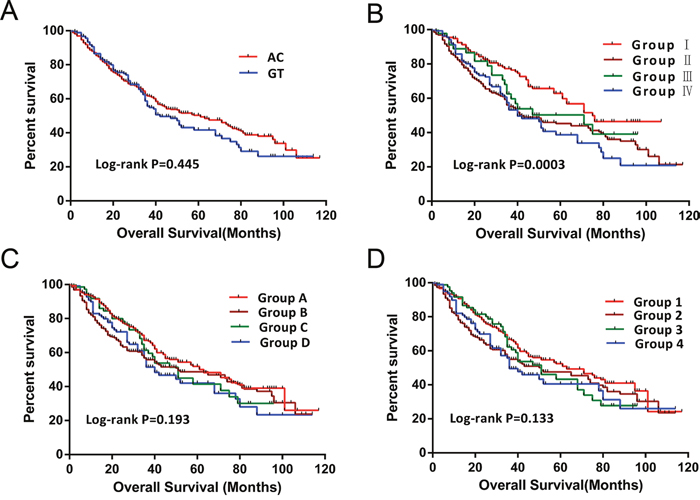 Survival curves of patients with different PLCE1 haplotypes and joint-effects analysis of different AFP levels.