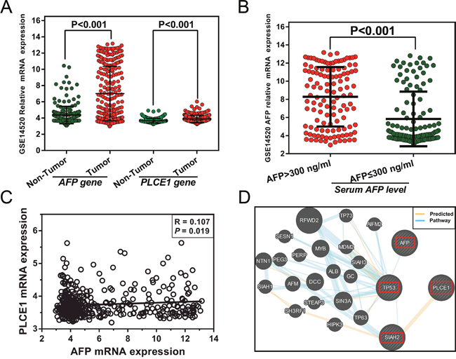 (A) AFP and PLCE1 mRNA expression in HBV-related HCC and adjacent normal tissue.
