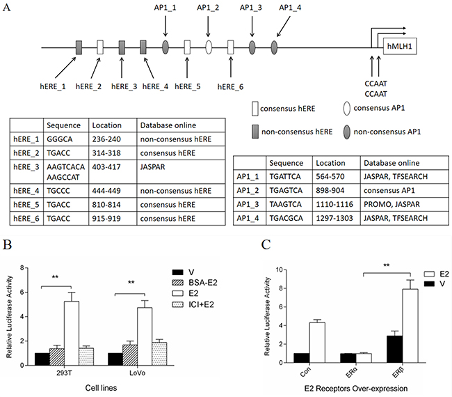 Dual-luciferase assay of MLH1 promoter luciferase constructs.