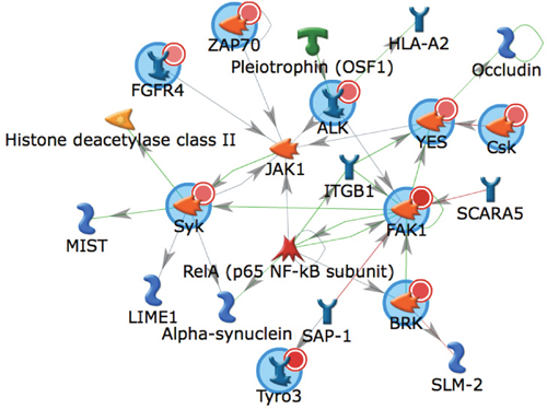Biological network of kinases identified as activated in metastatic RCC.