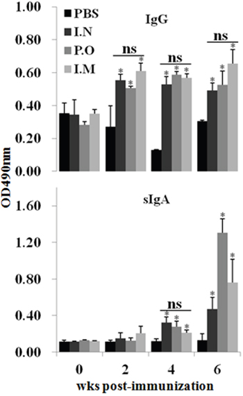 Effect of JOL1863 vaccination on the systemic IgG and mucosal IgA responses.