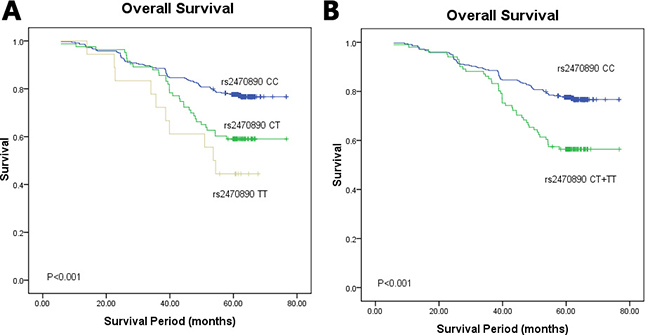 Kaplan–Meier survival curves of breast cancer patients carrying different genotypes of CYP1A2 rs2470890.