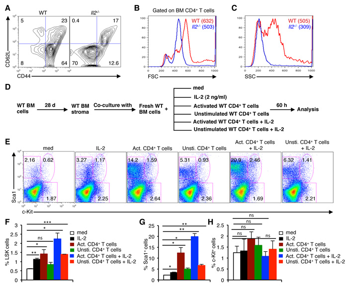 Activated T cells induce HSC defects in the BM.