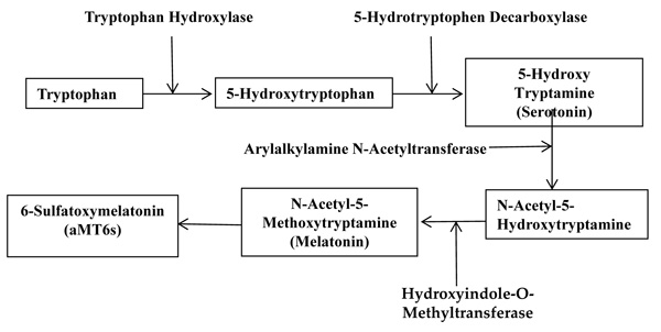 The biosynthesis and metabolism process of melatonin.