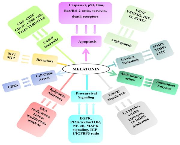 Mechanisms of the anticancer effect of melatonin.