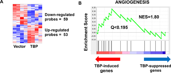 Microarray analysis reveals a modest but robust effect of TBP on global transcriptome.