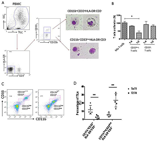 MDSCs of human bladder cancer are defined as CD11b+CD33lowHLA-DR−CD3− cells.