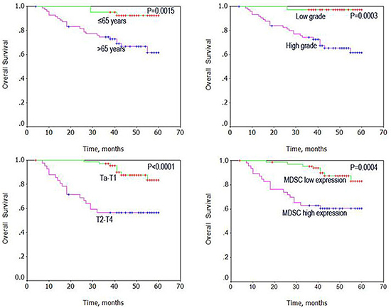 Univariate analysis of overall survival in patients with bladder cancer using the Kaplan Meier method.