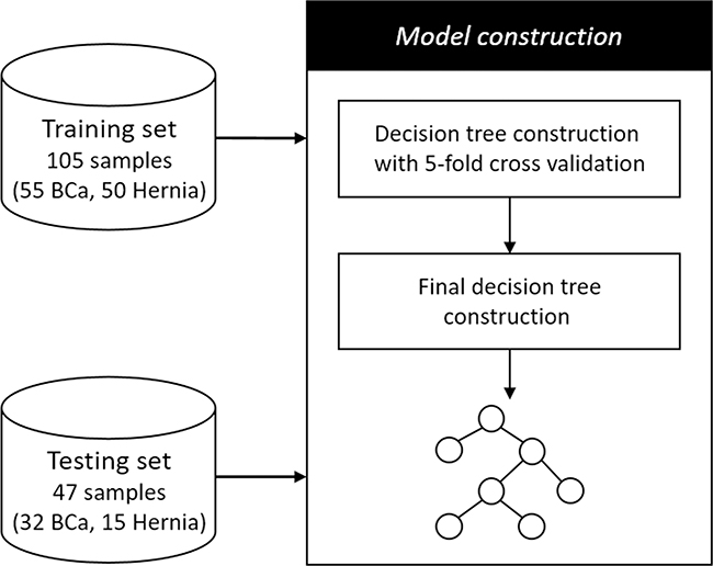 The decision tree construction and evaluation workflow.