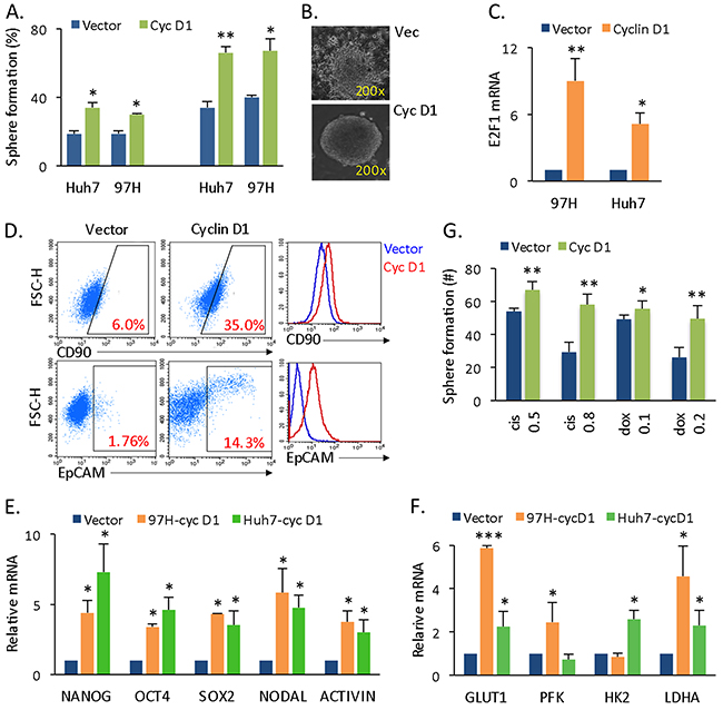 Cyclin D1 expression confers liver cancer cells with CSC and SC features.