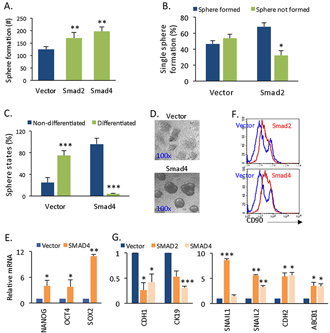 Smad4 and Smad2 expression promotes self-renewal and EMT.