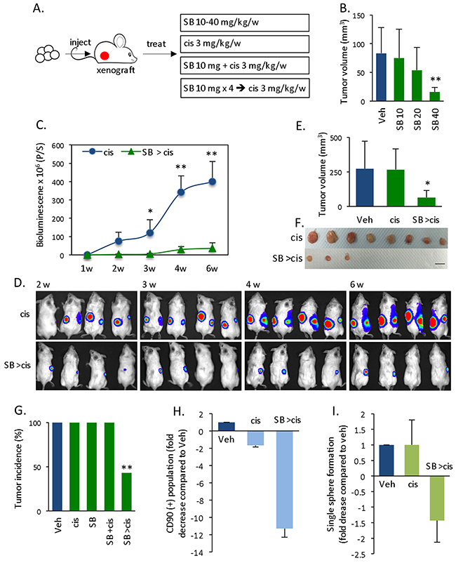 In vivo effects of Smad inhibitor-mediated chemosensitization.