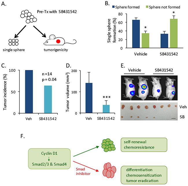 Decreased in vivo tumorigenecity of pretreated cells.