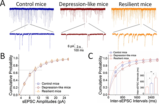 Excitatory synaptic transmission is downregulated in GABAergic neurons of the nucleus accumbens from CUMS-induced depression mice, but not resilience.