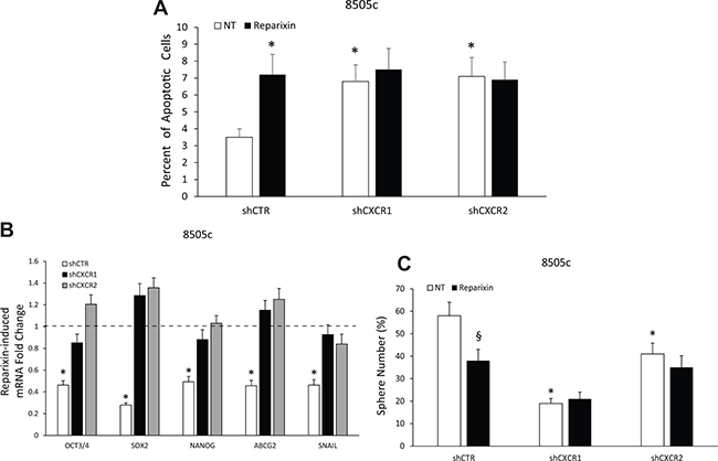 Reparixin effects on TC cells depend on both CXCR1 and CXCR2.