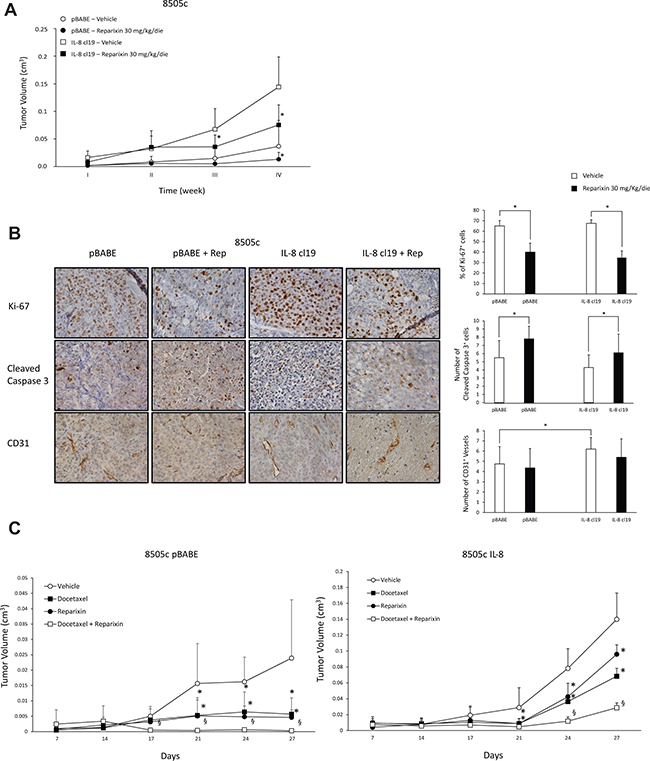 Reparixin inhibits xenograft growth of TC cells in nude mice.