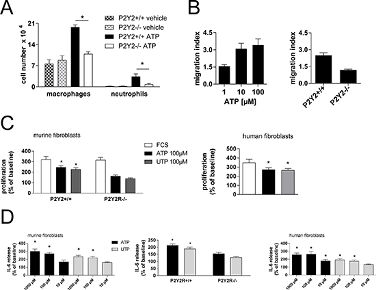 Mechanisms in P2Y2R-induced inflammation and fibrosis.