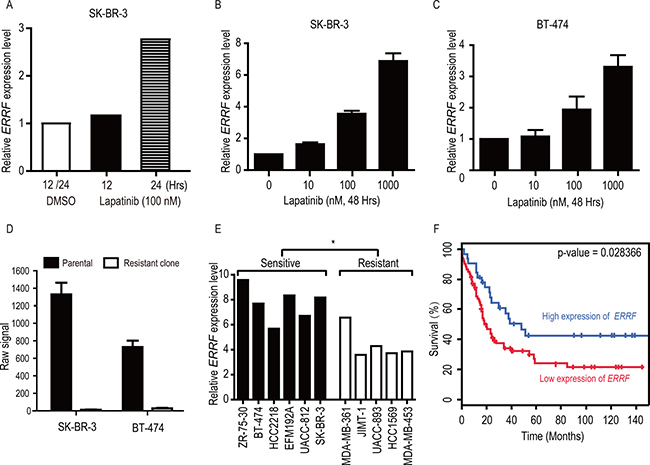 Lapatinib upregulates ERRF expression in SK-BR-3 and BT-474 breast cancer cell lines, and higher levels of ERRF correlate with lapatinib sensitivities and better patient survival.