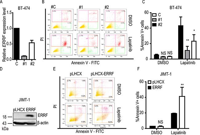 ERRF enhances lapatinib-mediated apoptosis.