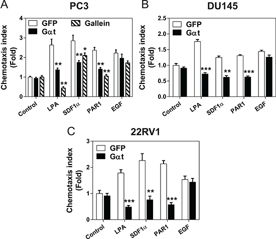 Blocking Gβγ signaling impedes GPCR-induced prostate cancer cell migration.