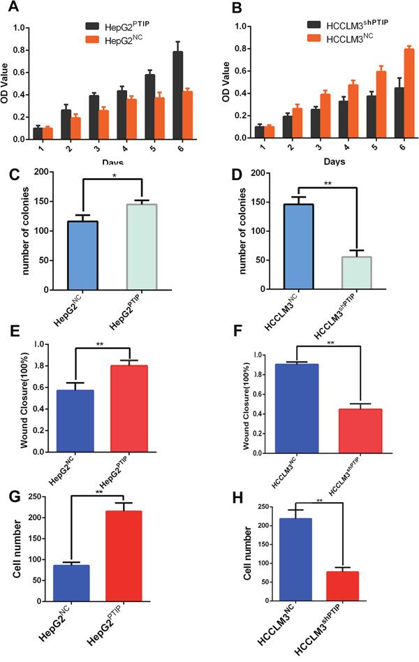 PTIP promotes proliferation and invasion of HCC cells in vitro.