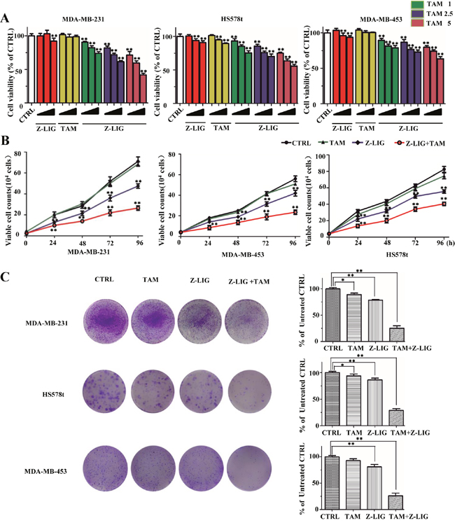 Inhibitory effect of Z-LIG and TAM alone or combination on ERα- breast cancer cells.