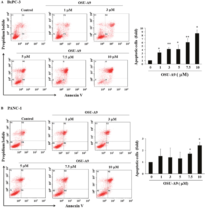 OSU-A9 induces apoptosis in BxPC-3 and PANC-1 cell lines.