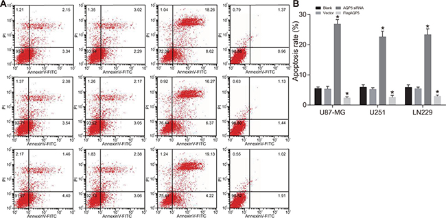 Effect of AQP5 gene silencing on the cell apoptosis of U87-MG, U251 and LN229.