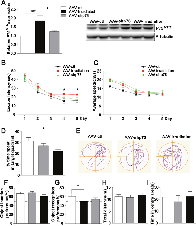 Knockdown of p75NTR in hippocampus rescues spatial and nonspatial memory deficits in irradiated rats.
