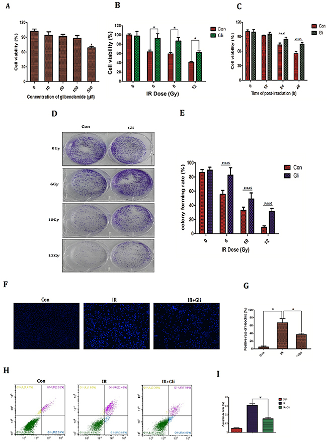 Glibenclamide reduced radiosensitivity of mice hepatocyte line.