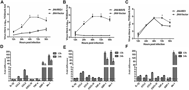 Functional analysis of RIG-I, MAVS and Mx1 in H5N1 infected guinea pig cells.
