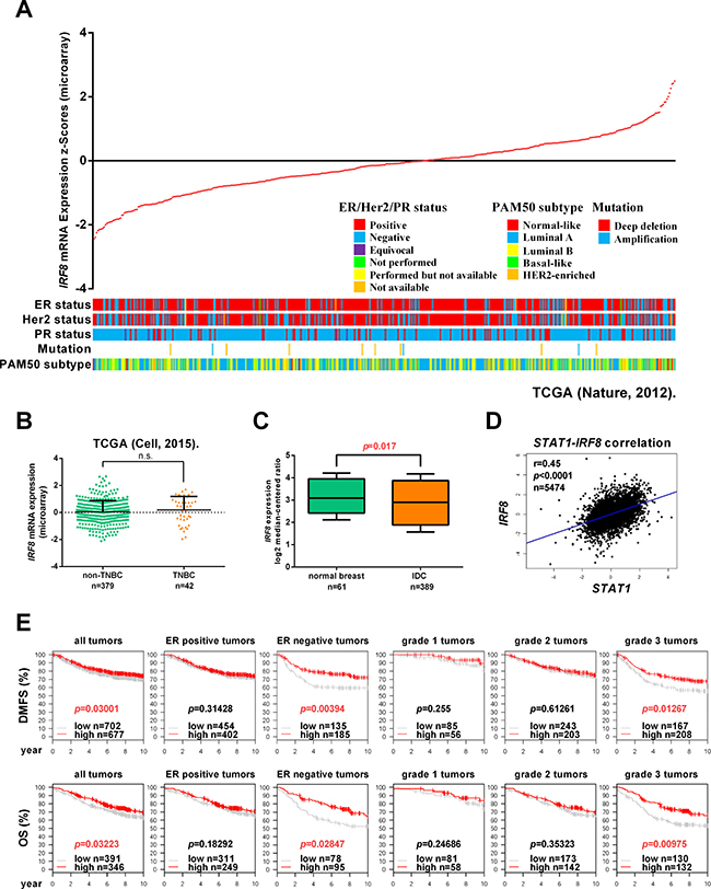 IRF8 is an independent prognostic factor for breast cancer.