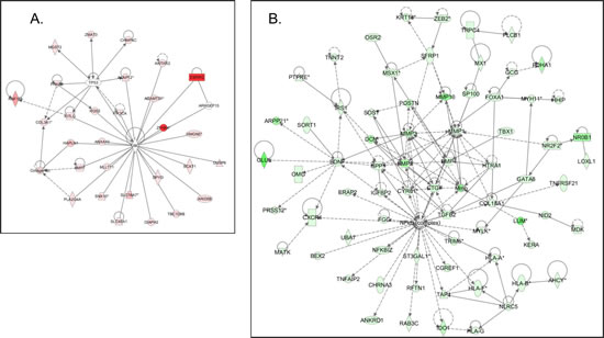 Network analysis of dynamic gene expression in A2780s cells based on the 1.5-fold common gene expression list obtained following shRNA-mediated