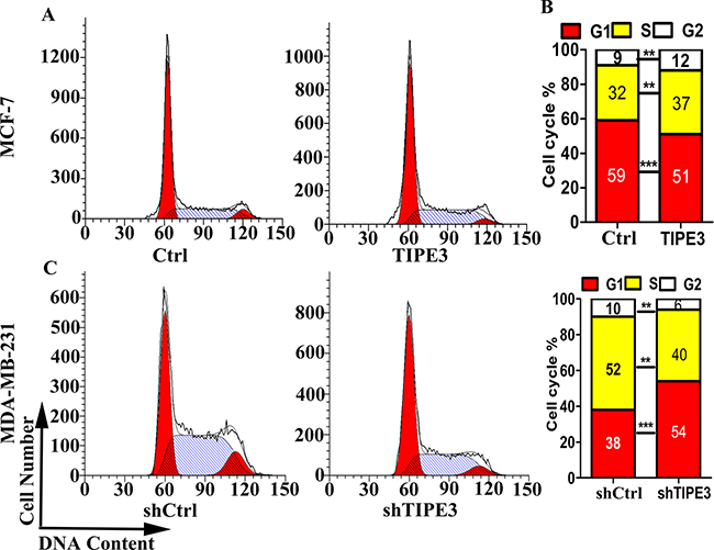TIPE3 accelerated cell cycle progression of human breast cancer cells.